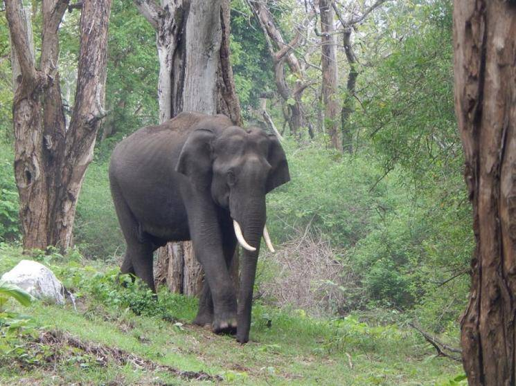 Farmer tries to cover up elephant's electrocution, youth electrocuted  - Daily news
