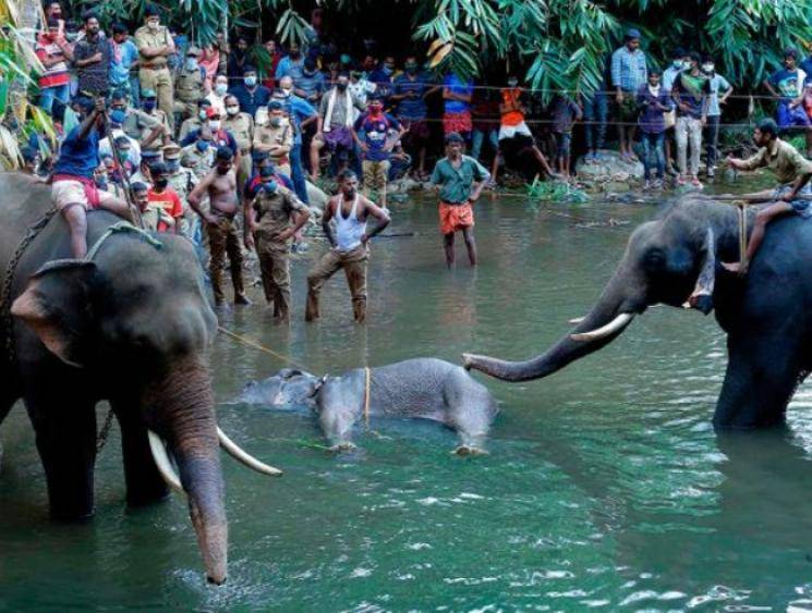 REPORT: Kerala pregnant elephant death - outrage leads to calls for stronger wildlife laws! - Daily news