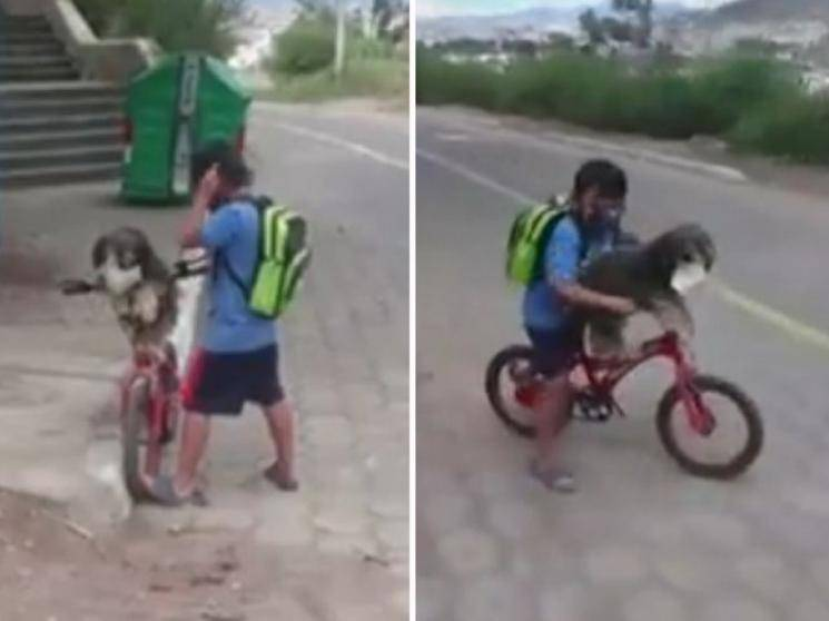 Boy helps pet dog put on mask for safety against coronavirus - viral video! - Daily news