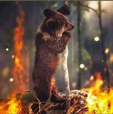 Amazon fire animal