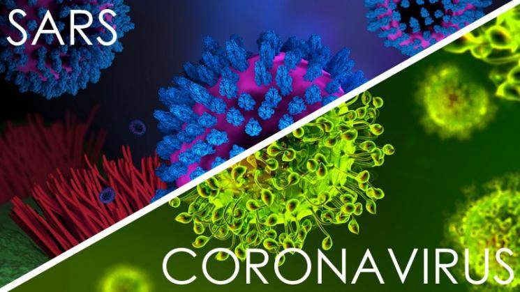 Researchers say SARS antibodies can block COVID-19 infection