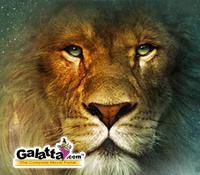 Narnia tops DVD sales list