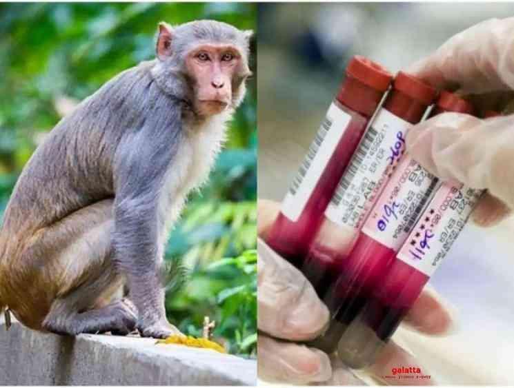 Monkey steals coronavirus patients blood samples from hospital - Tamil Movie Cinema News