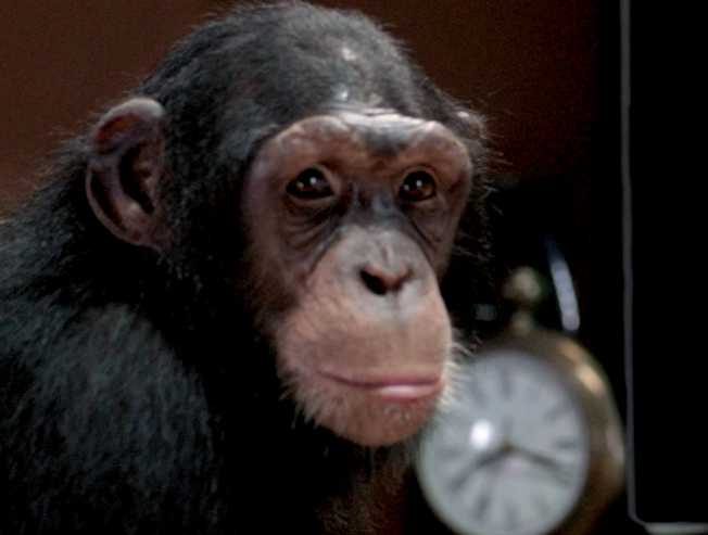 Jiiva Gorilla Sneak Peek character intro video of Mr Kong  - Tamil Movie Cinema News