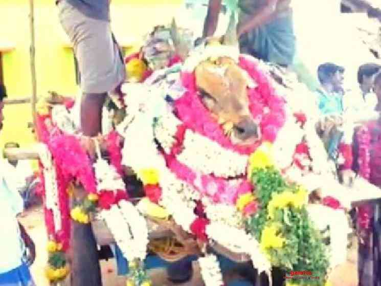 3000 people participate in Madurai bull funeral FIR filed - Tamil Movie Cinema News