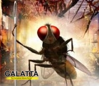 Eega makes it big at the Filmfare Awards!