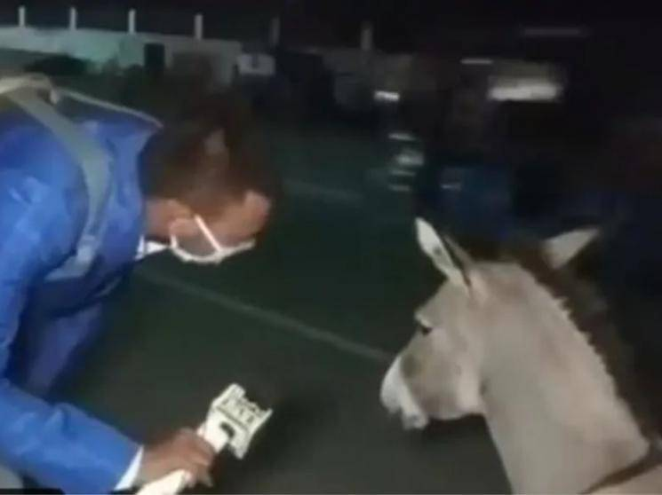Journalist creates mask awareness for coronavirus crisis by interviewing donkey